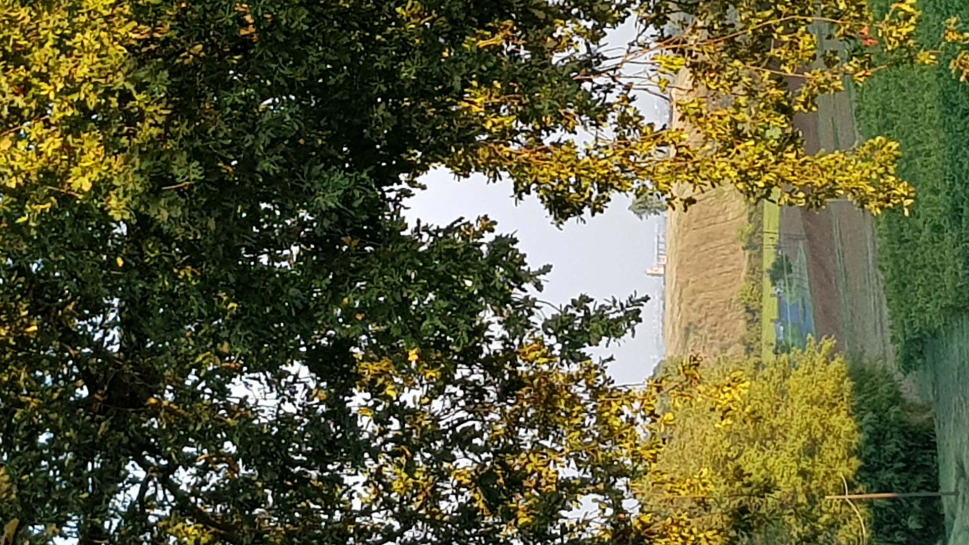 campanile Quargento-min